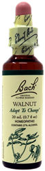 Walnut 20ml