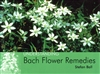 Pre-Read, Understanding Bach Flower Remedies